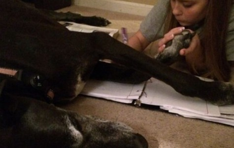Editorial: Pets Are Helpful to a Student's Developmental and Social Skills