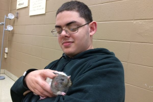 AP PSYCHOLOGY STUDENTS TEACH RATS -- Junior John Britt holds Jensen the rat while using classical conditioning techniques.