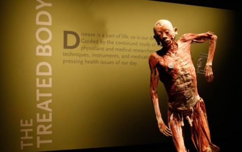 "Trip to ""Bodies: the Exhibition"" Takes Students Inside the Human Body"